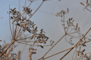 Leave seed heads on plants over winter for the birds to feed on